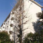 横浜市青葉区美しが丘1丁目のおすすめ賃貸|たまプラーザ団地1街区1号棟